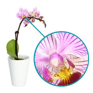 High quality picture of an orchid